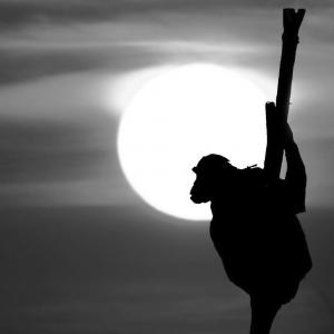 monkey new year blog sida yoga