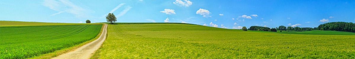 green meadow, inner peace